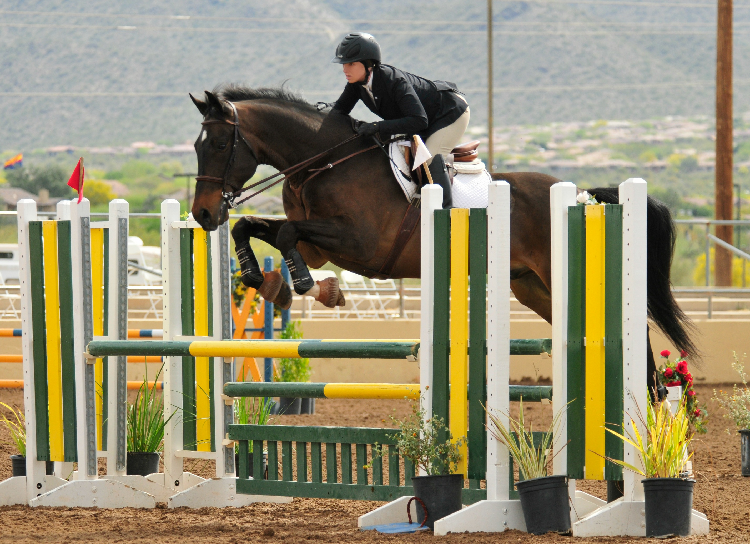 Lexi & Dante in the Low A/As