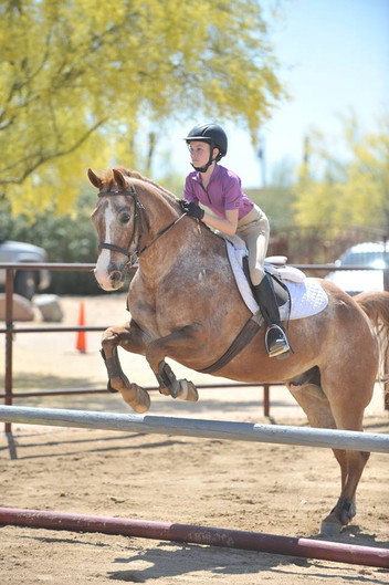 For Lease: Nazareth - POA Pony Gelding
