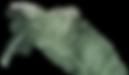 PSX_20200609_233859_edited_edited_edited