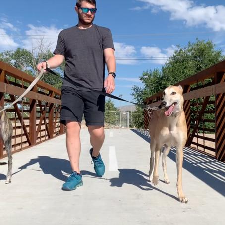 The Paso del Norte Trail is Pet-Friendly!