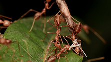 The Ant World - The Miracles of Macro Engineering