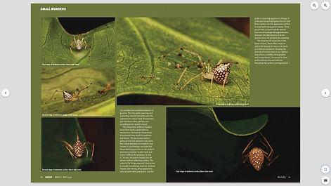 Mirror spider 02.jpg