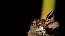 Honeydew - Role Reversal …is it?