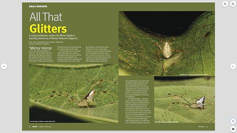 Mirror spider 01.jpg