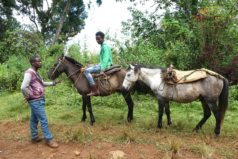 Horses are a common transport in Ethiopia..JPG