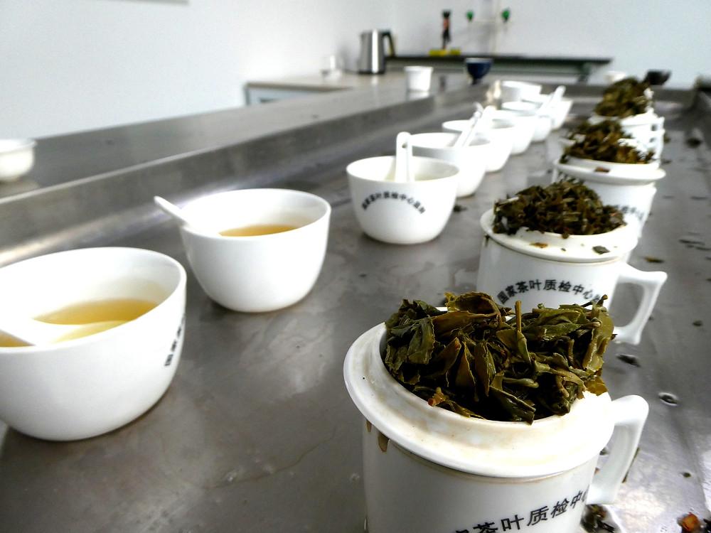 Tea tasting, China, organic