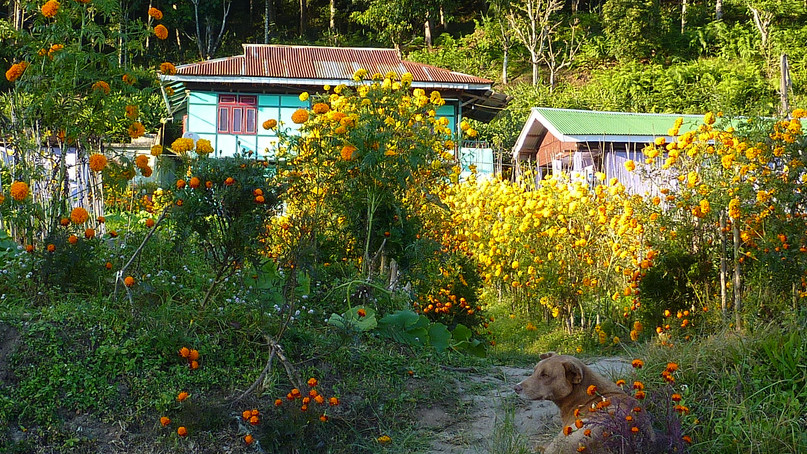 Eco village Budhang in Sikkim Organic State