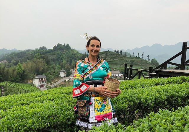 #TraditionalTeaPicker #chineseteagardens