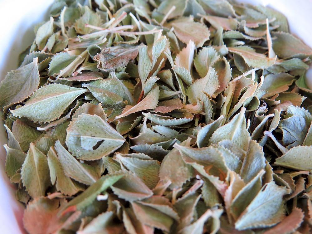 dried Buchu leaves