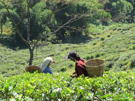 India is an Organic Hotspot