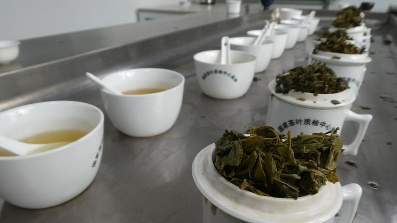 Professional tea tasting.JPG