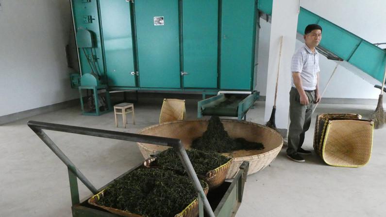 Tea processing in China_bearbeitet.jpg