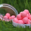Thumbnail: RED LIVER - HIGH VIZ PINK POP UPS