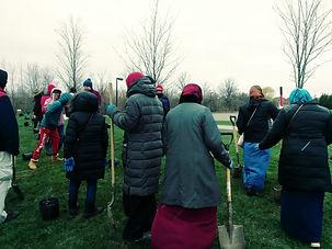 Tree Planting Mississauga 2.JPG