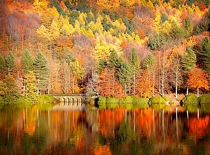 осень.png
