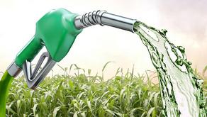 Biocombustíveis - Uma alternativa econômica e sustentável para o petróleo