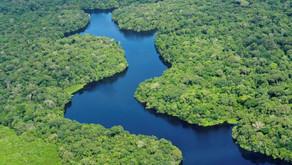 Floresta Amazônica: por que é tão importante?