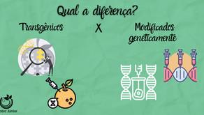 Diferença entre OGM e transgênico.