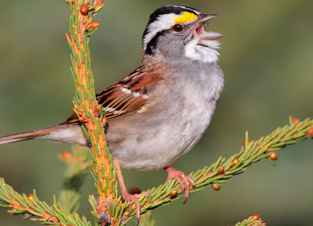 New York City Passes Country's Most Wide-ranging Bird-friendly Building Legislation