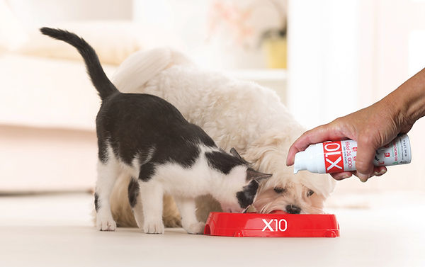 Dog and cat eating with X10