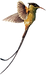streamer-tailed-hummingbird png.png