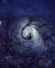 starlight tree nest.jpg