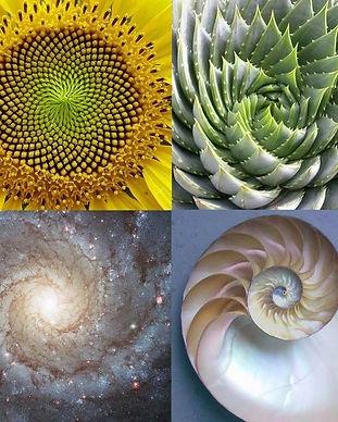 A-torus-in-Nature.jpg