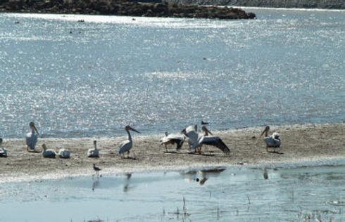 Salt Plains National Wildlife Refuge.jpg