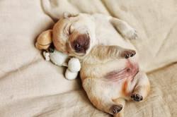 Los-perros-más-pequeños-del-mundo-20-730x487