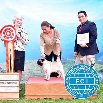El Mejor Pug de Guatemala, El Matador Sanchez