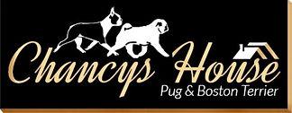 Los mejores Pugs y Boston Terrier de Guatemala