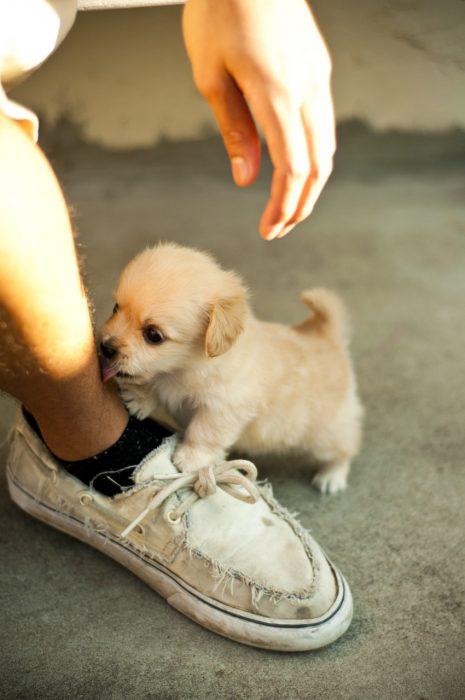 Los-perros-más-pequeños-del-mundo-21-465x700