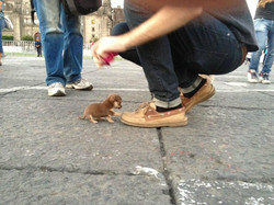 Los-perros-más-pequeños-del-mundo-14-730x548