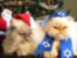 holidaycats.png
