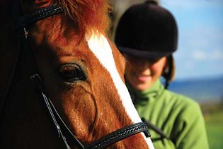 The Paddocks at Duck Harbor for the horse enthusiast