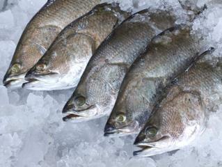 กินปลา...รักษาโรค
