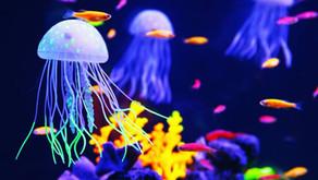 ''I am a jellyfish''! - Jellyfish Medicine