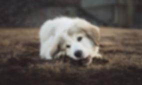 adorable-animal-baby-dog-2174209.jpg