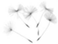 dandelion-seeds-2483277_960_720.png