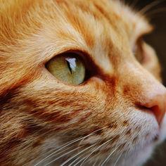 cat-1455468.jpg