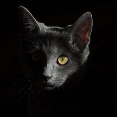 cat-778315.jpg