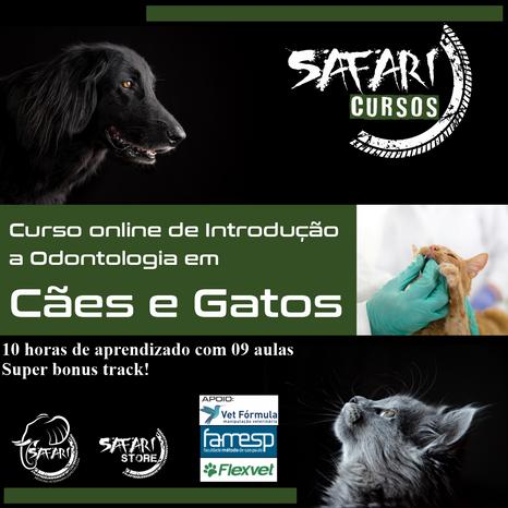 Introdução Odontologia em Cães e Gatos