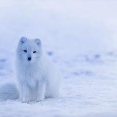iceland-1979445.jpg