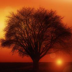 tree-117582.jpg