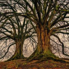 tree-3097419.jpg
