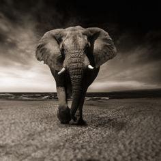 elephant-2870777.jpg