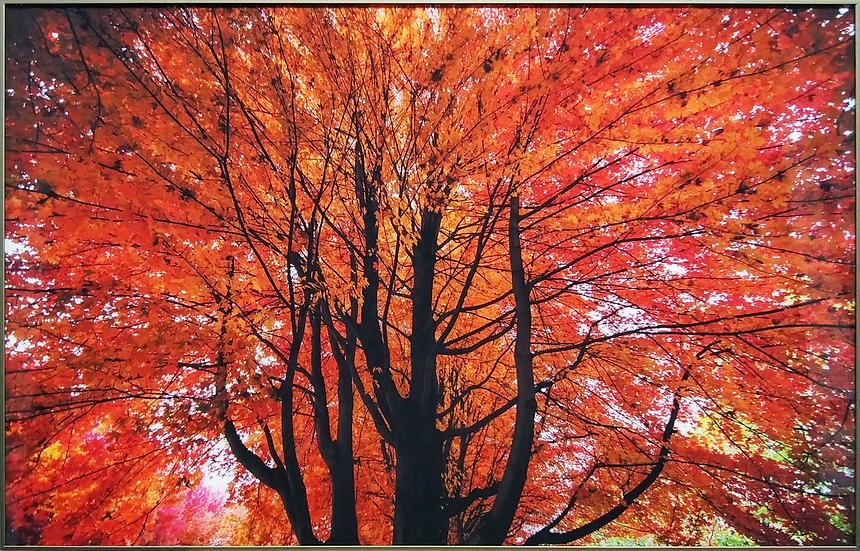 Impressão em vidro - Árvore vermelha