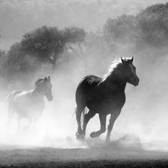 horses-430441.jpg