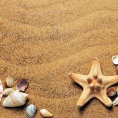 seashells-1337565.jpg