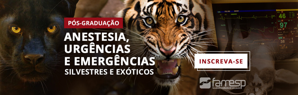 pos-graduacao-anestesia-urgencia-animais